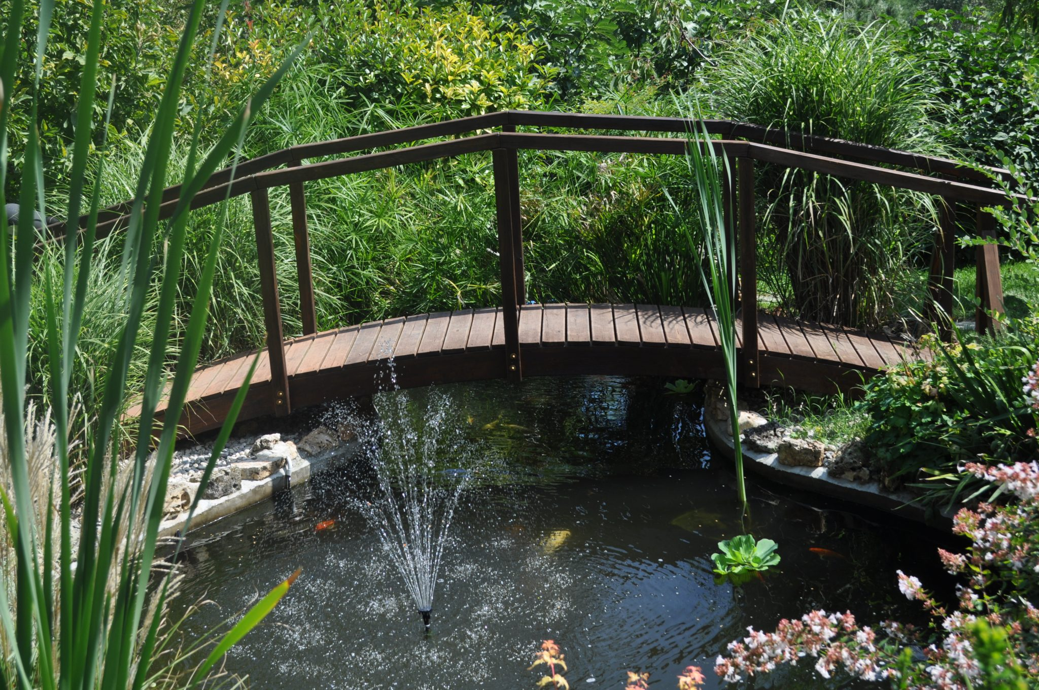 Il laghetto ornamentale cosa prevede la legislazione for Piante da laghetto ossigenanti