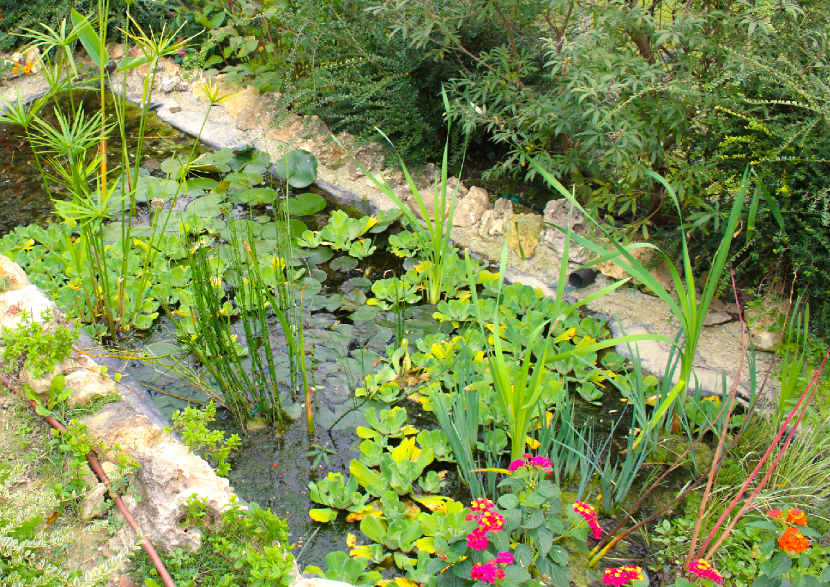 stagno per piante acquatiche laghetti ornamentali