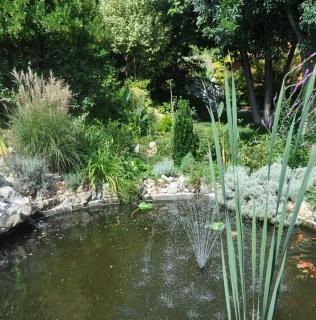 Le piante per il laghetto ornamentale