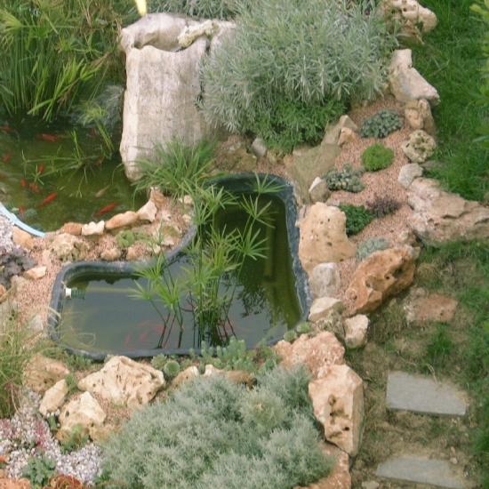 Stagno per piante acquatiche laghetti ornamentali for Vasche preformate per laghetto
